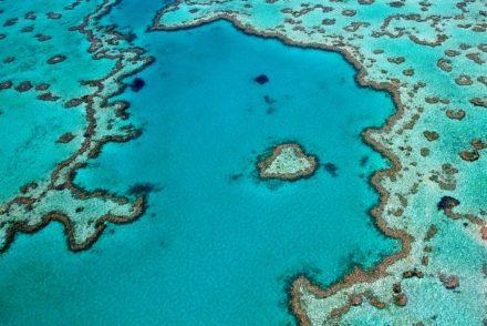 POD Travels - Great Barrier Reef