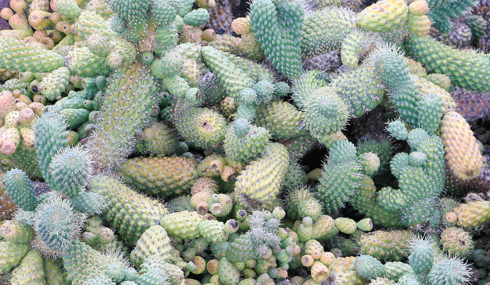 The magnificent jard n de cactus pod travels for Jardines con cactus